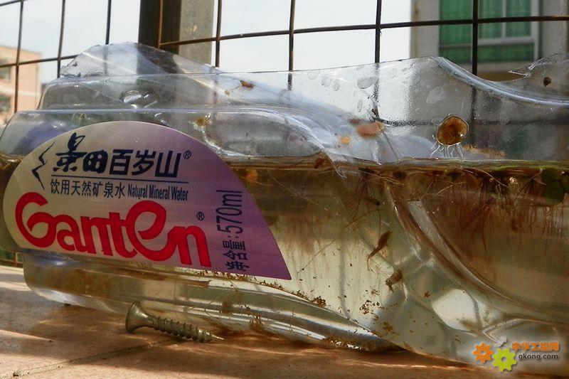 矿泉水瓶手工制作小鱼